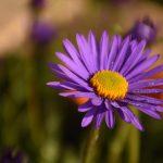 Adlerhorst Garten Blumen