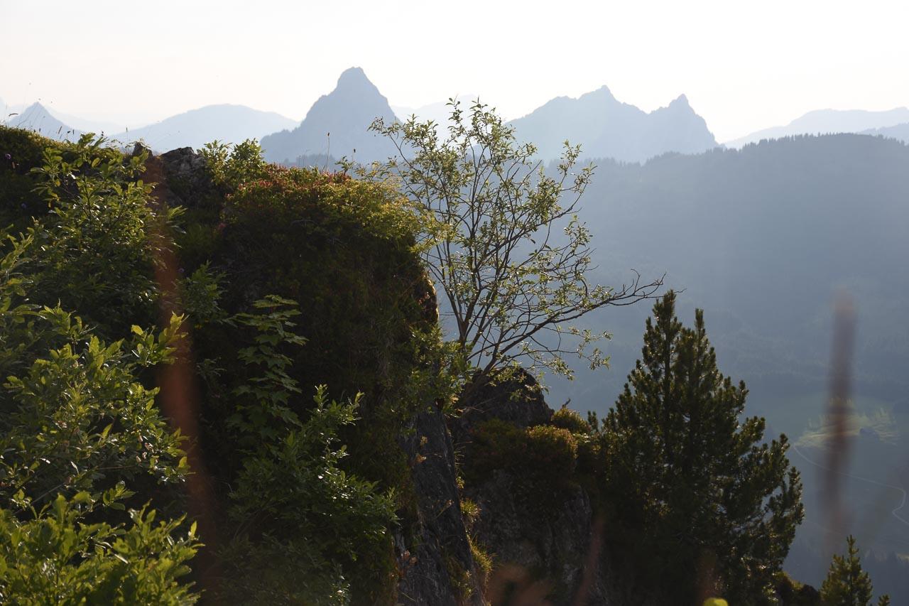 Adlerhorst Wandern Roggenstock Mythen