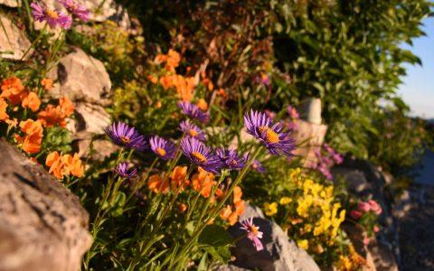 Adlerhorst Blumen Garten