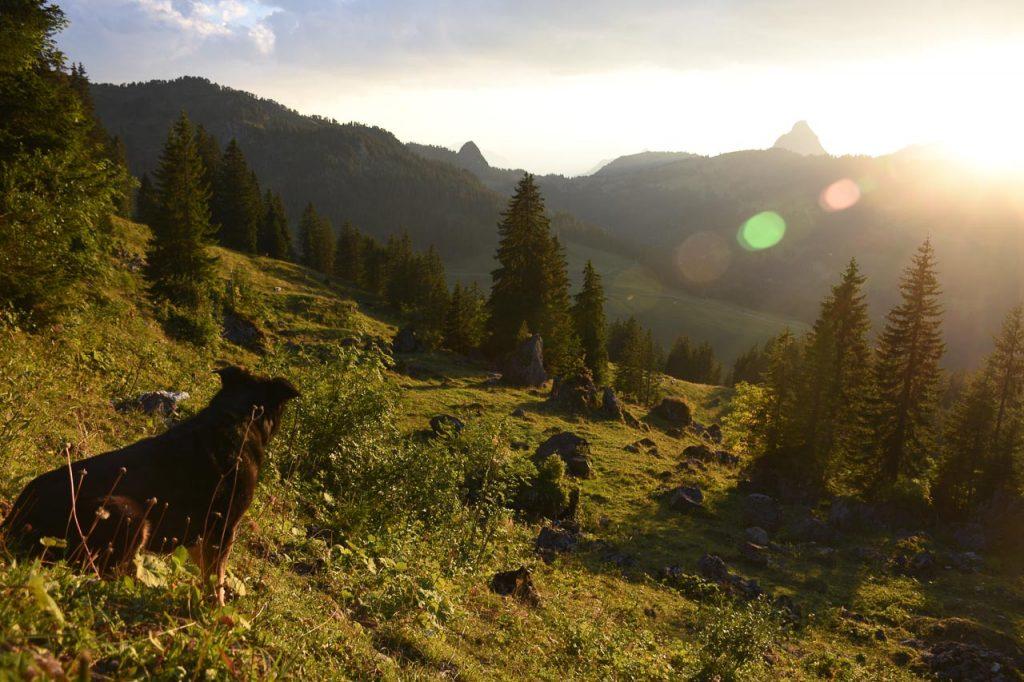Sonnenuntergang Wald Ibergeregg Mythen