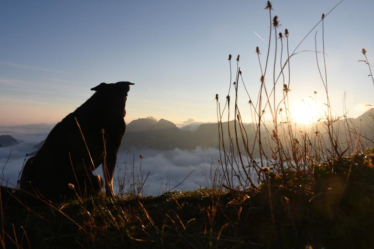 Tschinga Roggenstock Sonnenaufgang Nebelmeer