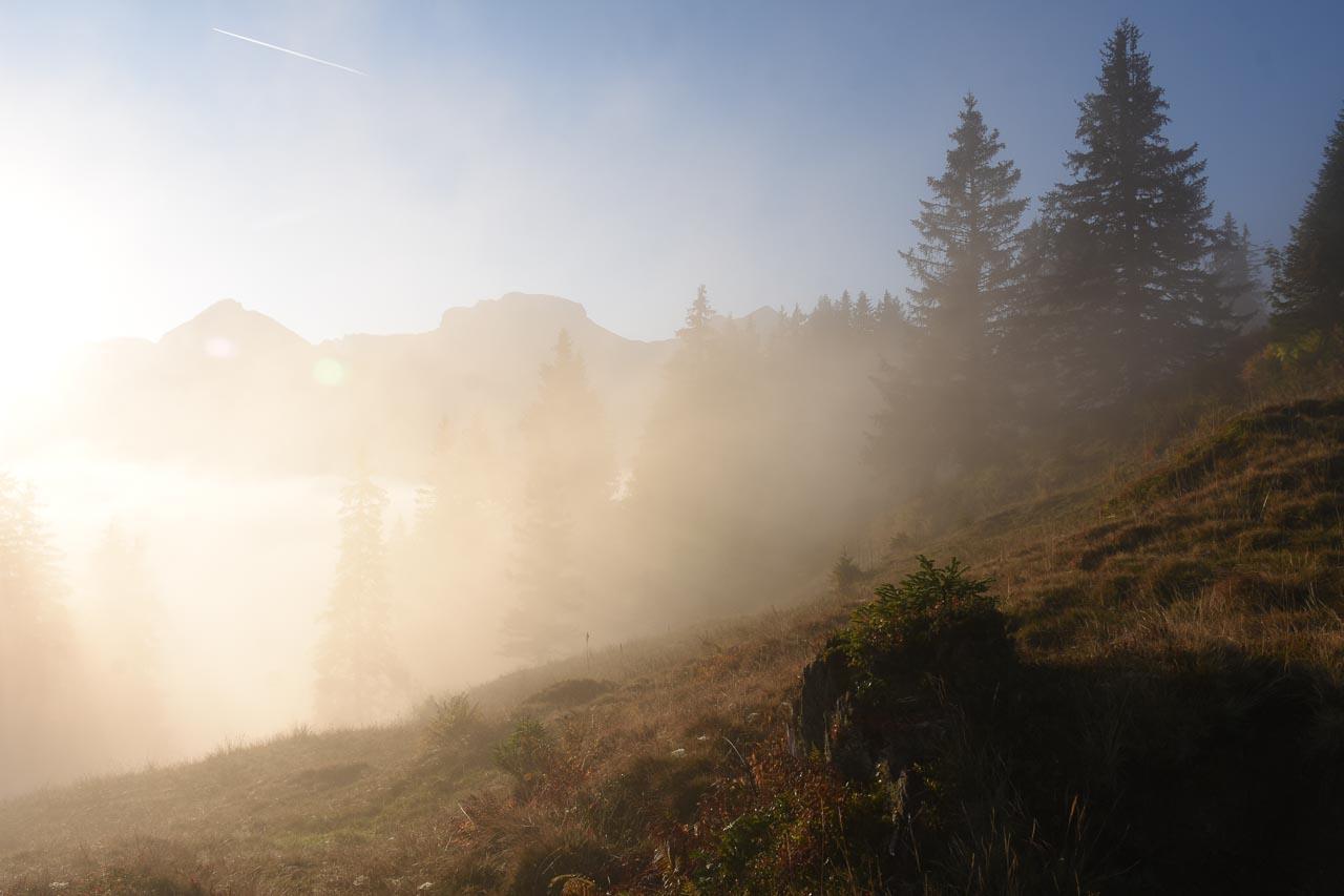 Adlerhorst Nebel Roggenstock Hoch-Ybrig Herbst