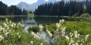 Hoch-Ybrig Zentralschweiz Wanderparadies Seebli-See Druesberg Forstberg