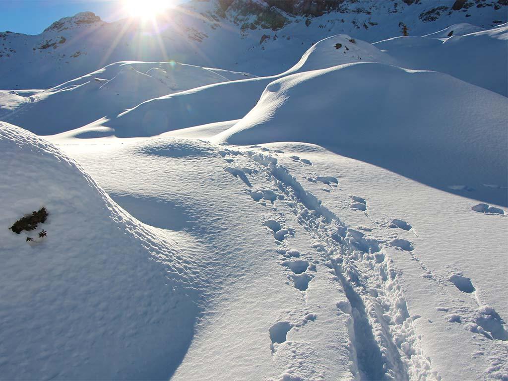 Schneeschuhtrekking Tubenmoos Hoch-Ybrig Spuren