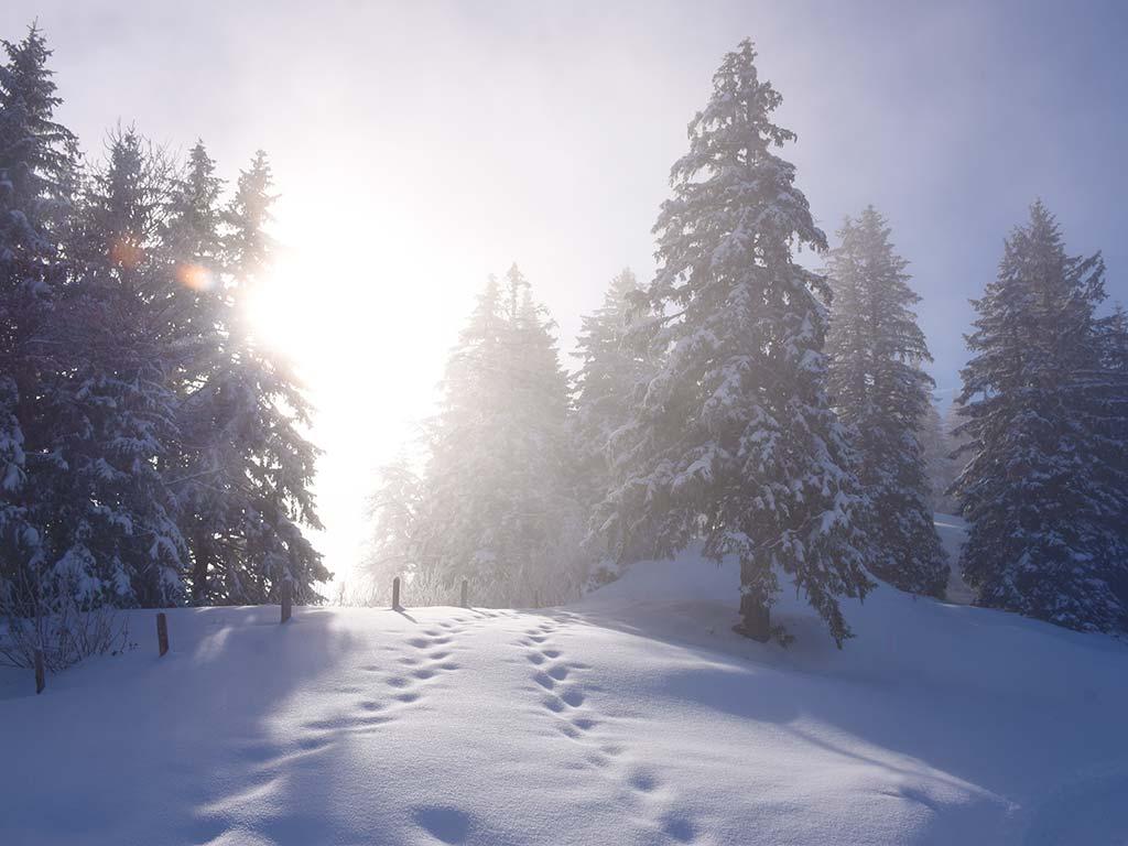 Adlerhorst Oberiberg Hoch-Ybrig Wald Winter Schnee