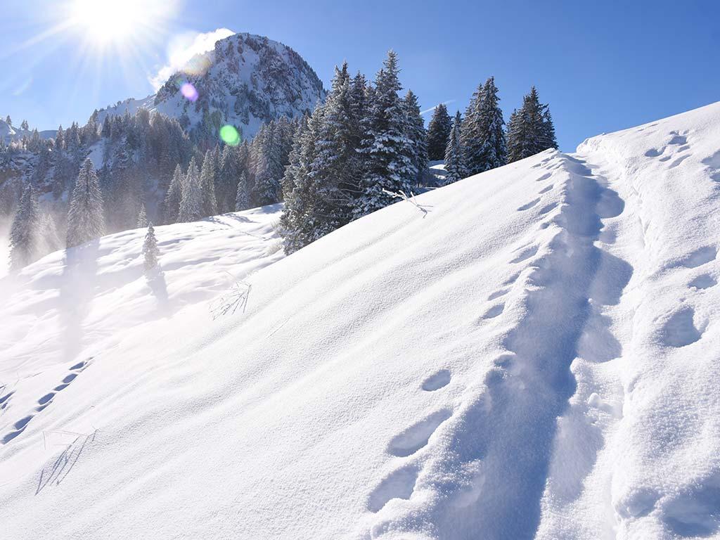 Winter Roggenstock Schneeschuhtour und Fondue Bergbeizli Adlerhorst Hoch-Ybrig