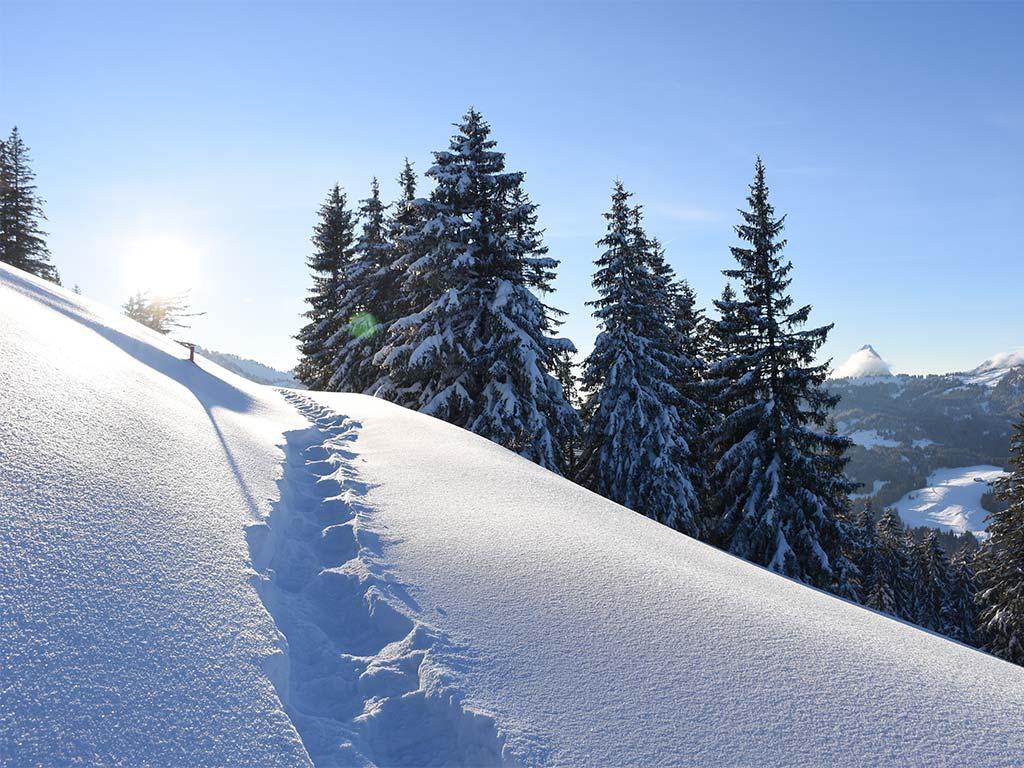 Schneeschuh-Trail Berggasthaus Adlerhorst Winter Schnee