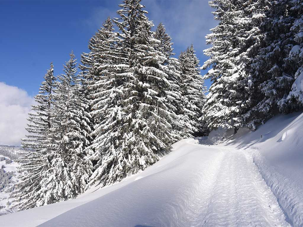 Adlerhorst Winterwanderweg