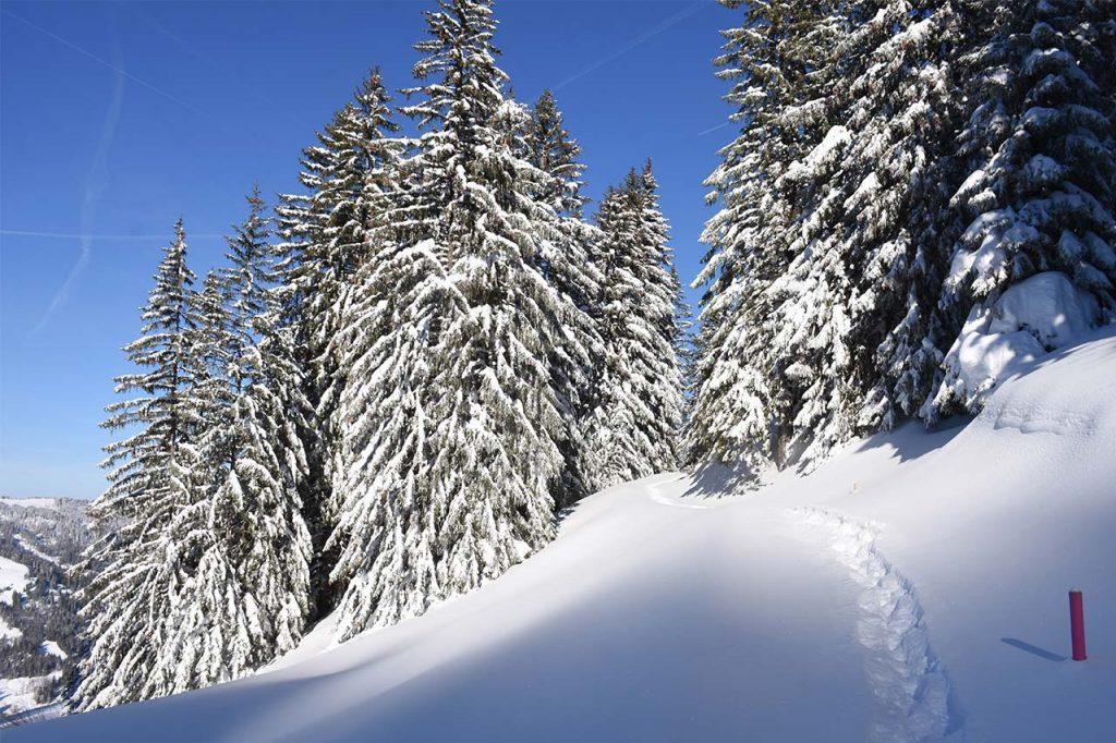 Schneeschuhtour, Winterwanderweg