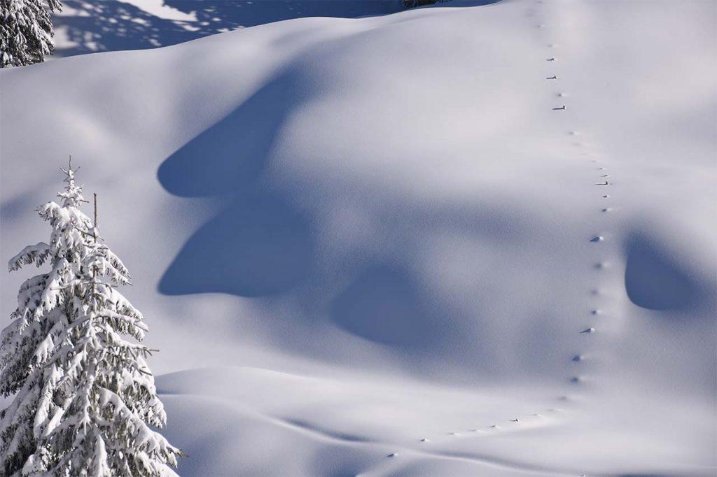 Tubenmoos im Winter