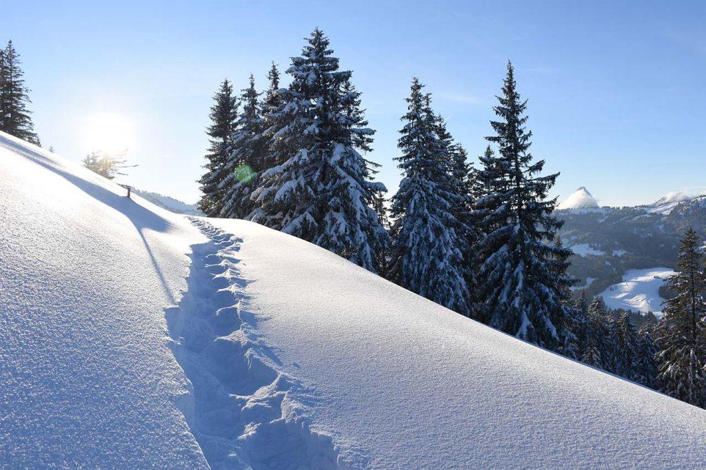 Schneeschuhtrail im Winter