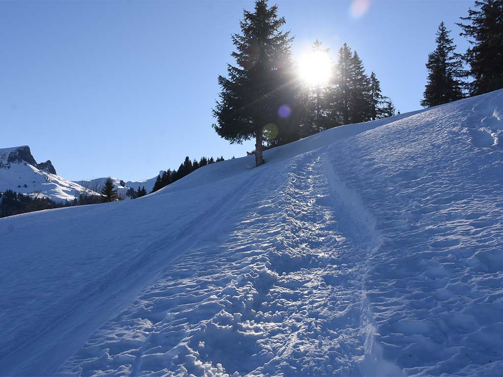 Winterwanderweg zum Adlerhorst