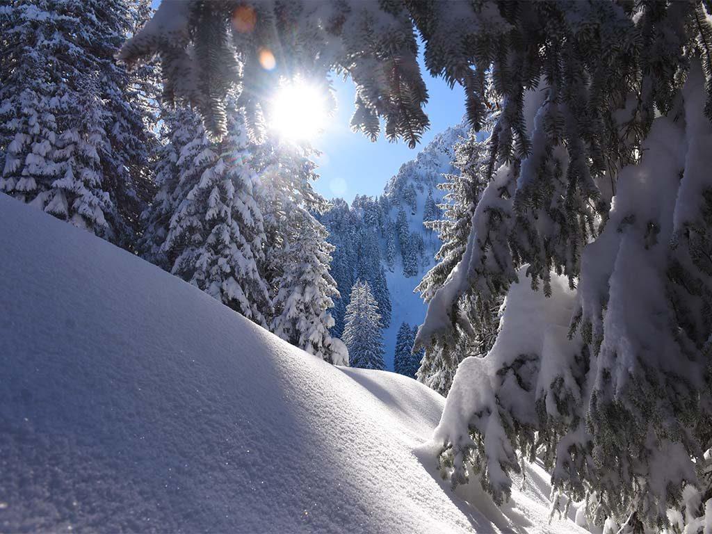 Winterwald Roggenstock