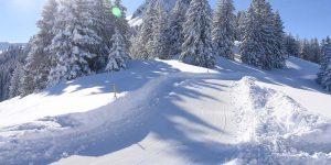 Winterwanderweg Fuederegg-Adlerhorst präpariert