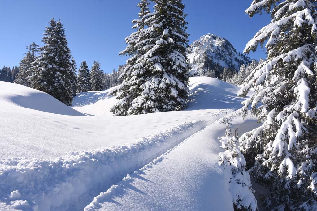 Winterwanderung Adlerhorst Tubenmoos Schlipfauwaid Roggenstock