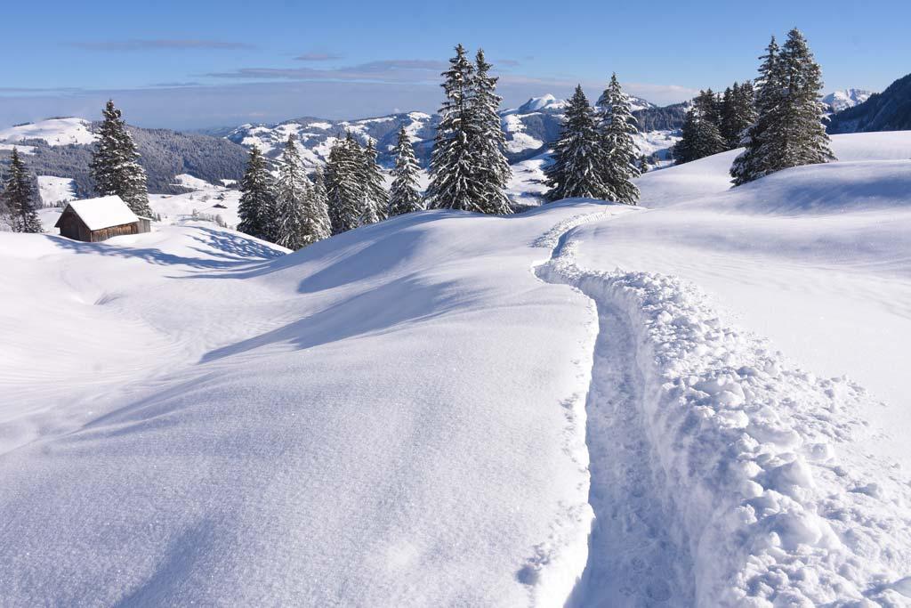 Schneeschuhtrail Adlerhorst Tubenmoos Oberiberg