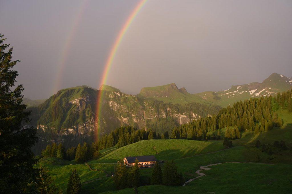 Tubenmoos Hoch-Ybrig Regenbogen