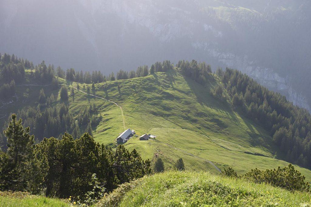 Roggenegg Ybrig Alp