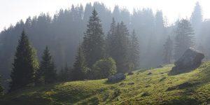 Moorlandschaft Bergwald Ybrig