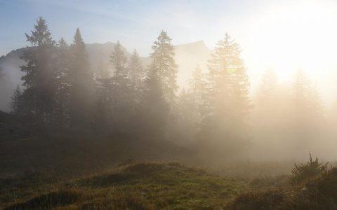 Wald Feuchtgebiet Moor Ybrig Landschaft des Jahres