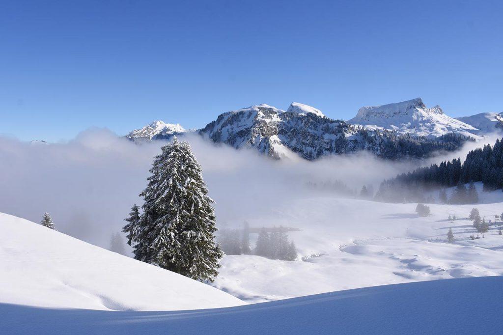 Tubenmoos Hoch-Ybrig Oberiberg im Winter