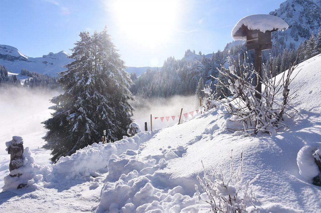 Adlerhorst Garten Winter Schnee