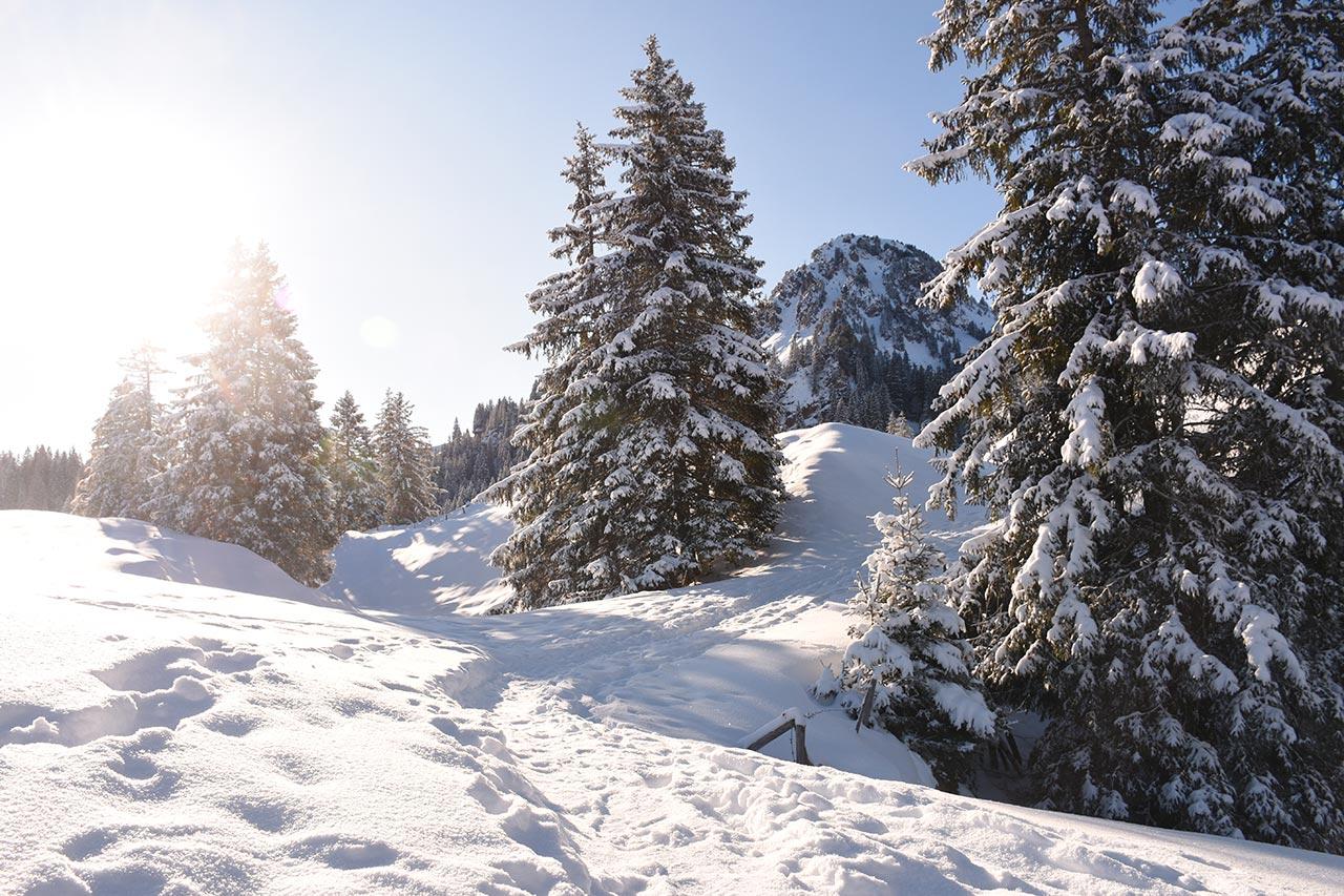 Adlerhorst Roggenstock Tubenmoos Winter Schnee
