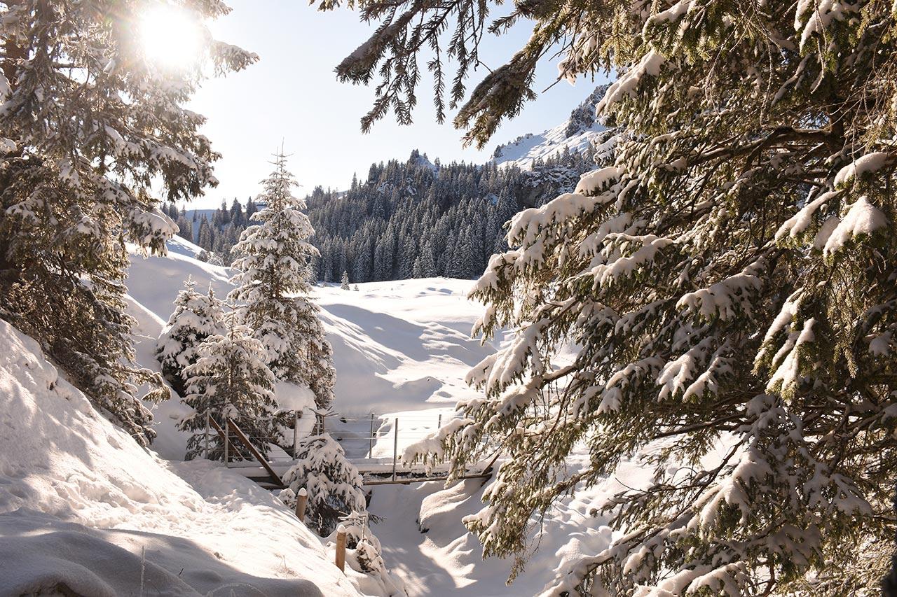 Adlerhorst Tubenmoos Bach Winter Schnee