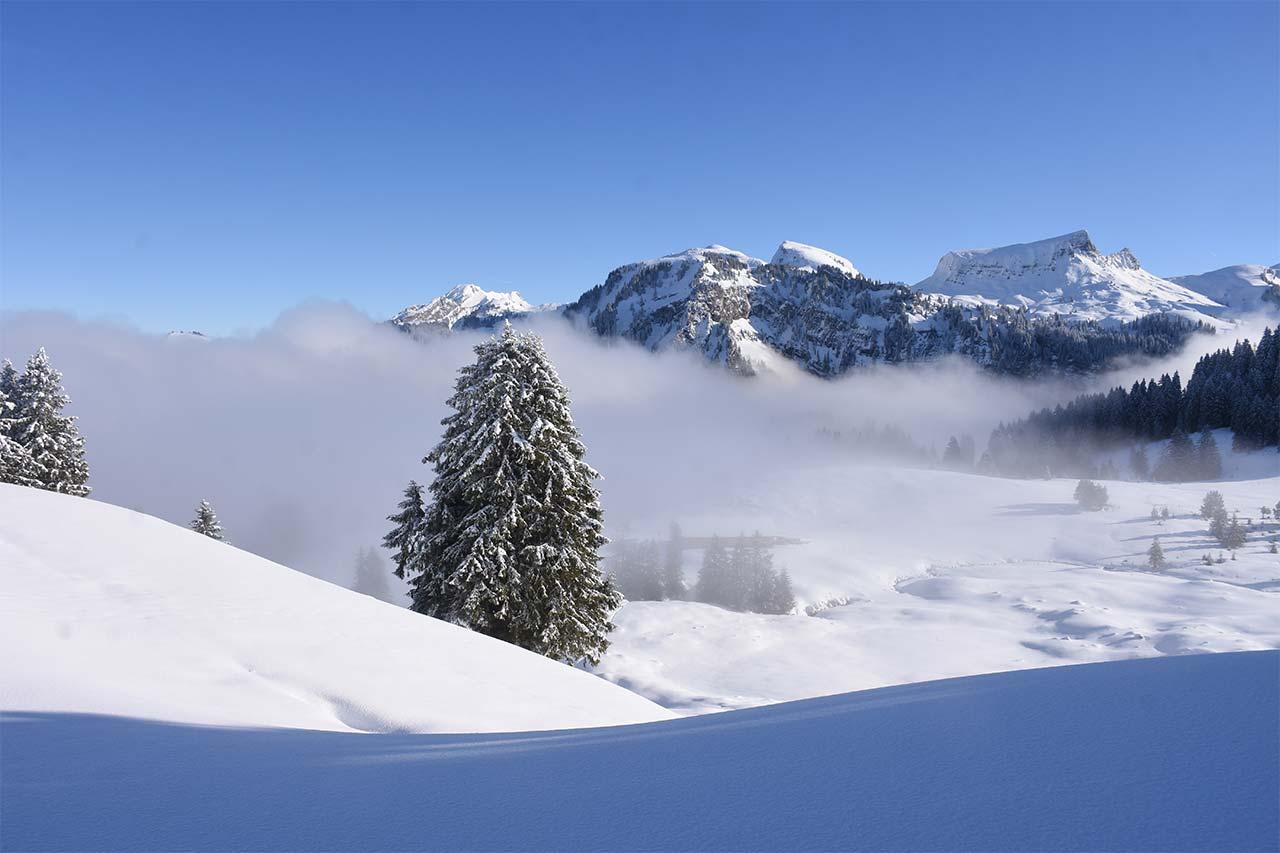 Tubenmoos Oberiberg Hoch-Ybrig Winter Schnee
