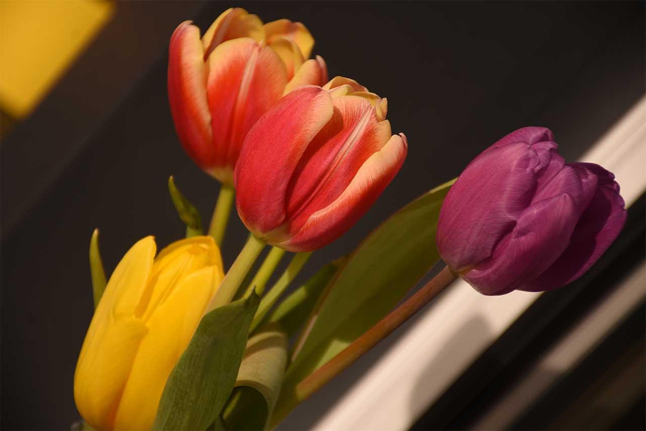 Adlerhorst Tulpen Tischdekoration Terrasse