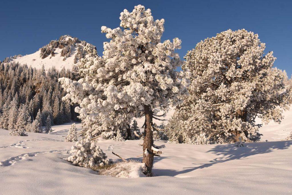 Roggenstock im Winter Tubenmoss