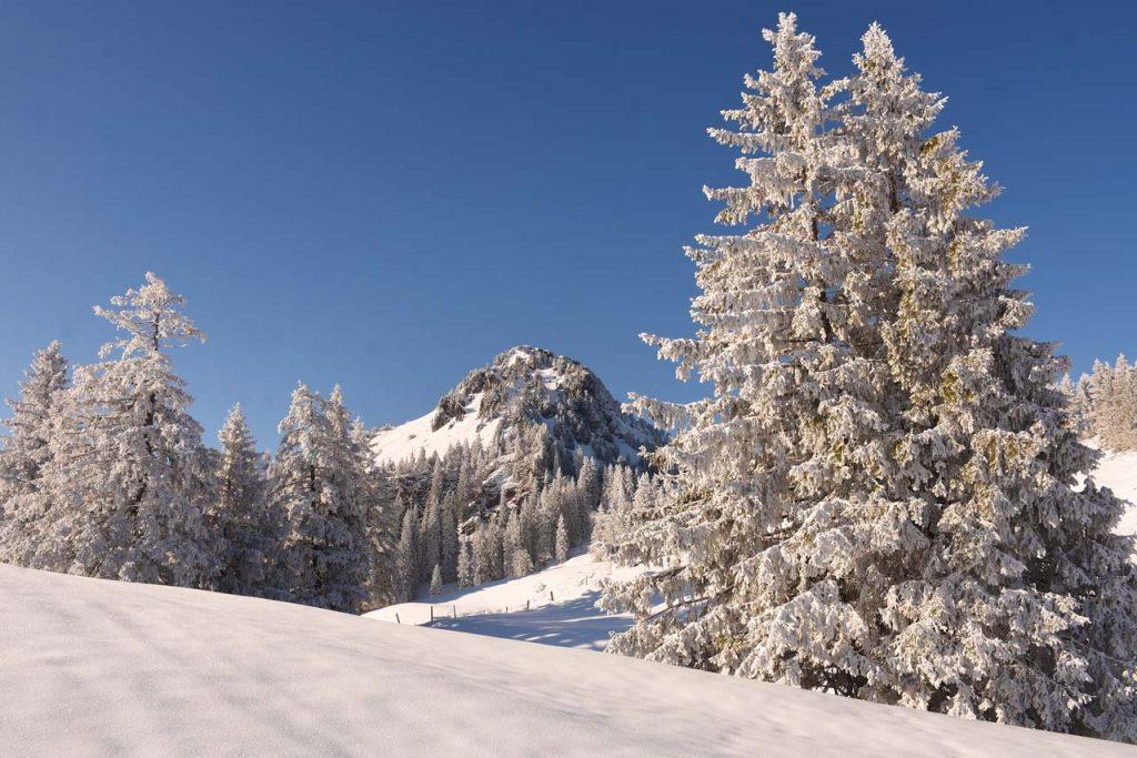 Tubenmoos Roggenstock Winter Hoch-Ybrig