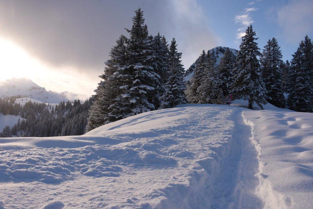 Roggenstock Hoch-Ybrig Winterwunderland Pulverschnee Winterwanderweg